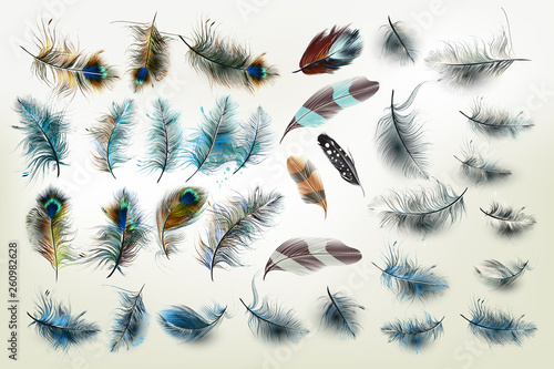 Wall mural Huge vector collection of realistic fashion feathers for design