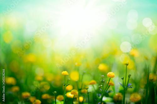 Carta da parati Yellow spring flowers on sunny green meadow background
