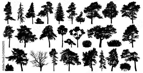 Stampa su Tela Trees set isolated on white background