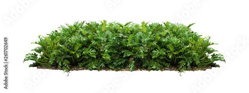 Fotografija plant bush tree isolated with clipping path