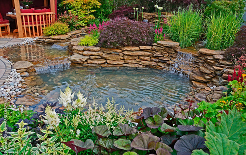 Fototapeta The pond area in an aquatic garden with planted rockery and waterfalls and summe