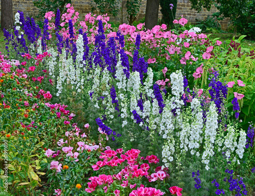Photo Colourful border with Delphinium consolida, Larkspur, Lavatera and Godetia flowe