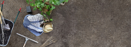 Stampa su Tela man gardening work in the vegetable garden place a plant in the ground so that i
