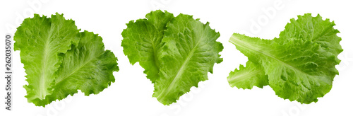 Photo lettuce leaves Clipping Path