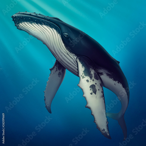 Photo Whale under water realistic illustration of a copis
