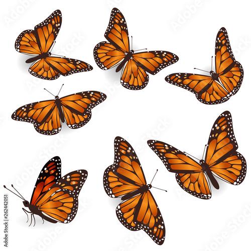 Carta da parati Vector Orange Tropical flying Butterflies Illustration Set