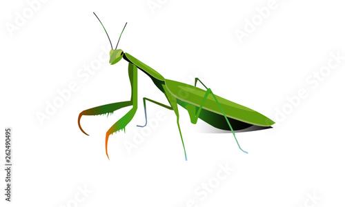Stampa su Tela grasshopper on white background