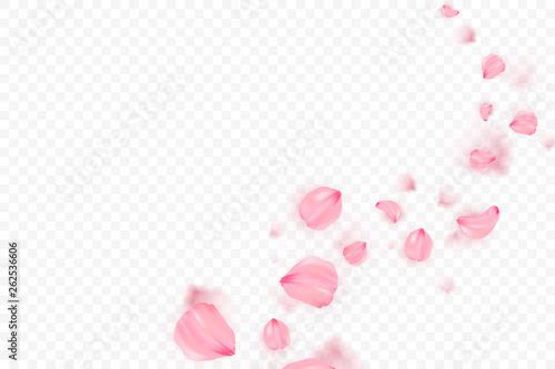 Photo Pink sakura falling petals vector background