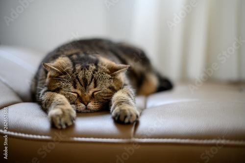 Photo cat Cute little red kitten sleeps sleeping cat