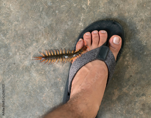 Fotografija People were bitten by a centipede on their feet