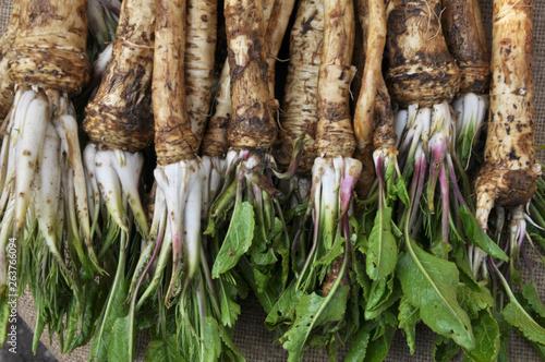 Fresh, dug-out horseradish Fototapet