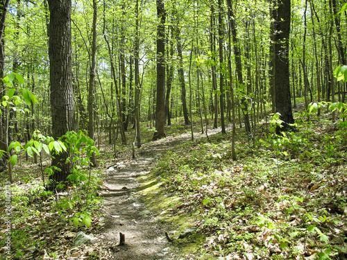 Foto Appalachian Trail in the springtime