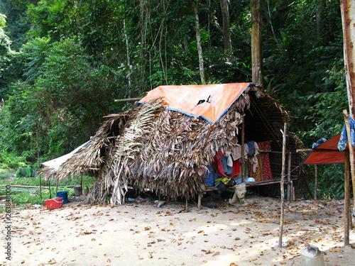 Fotografie, Tablou Taman Negara, Rain forest, Malaysia