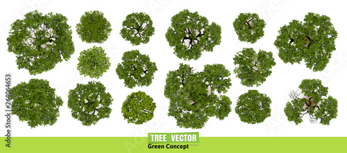 Trees top view for landscape vector illustration.