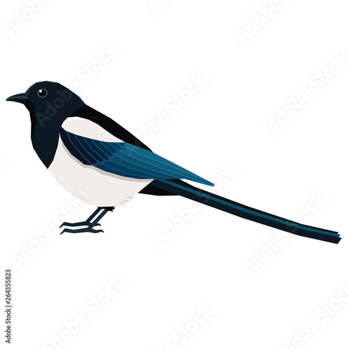Photo Birds collection Magpie Vector illustration Isolated object