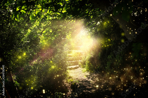 Carta da parati Road and stone stairs in magical and mysterious dark forest with mystical sun light and firefly
