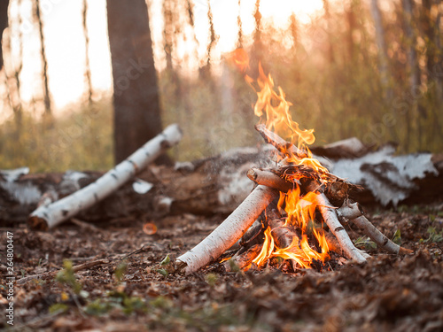 Foto Bonfire in forest at sunset