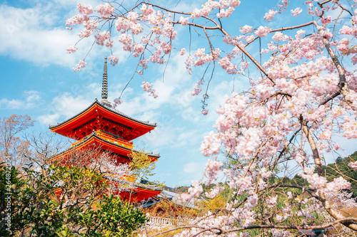 Fototapeta premium Świątynia Kiyomizu-dera z kwiatami wiśni na wiosnę w Kioto, Japonia