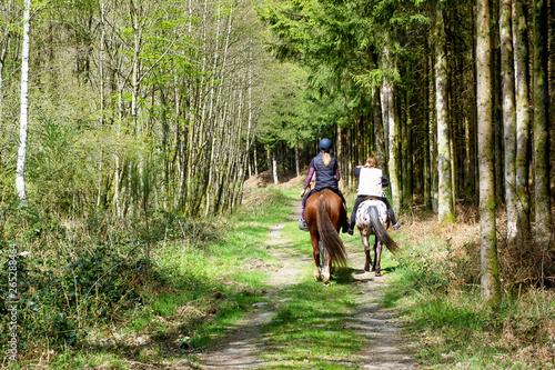chevaux balade foret Fototapet