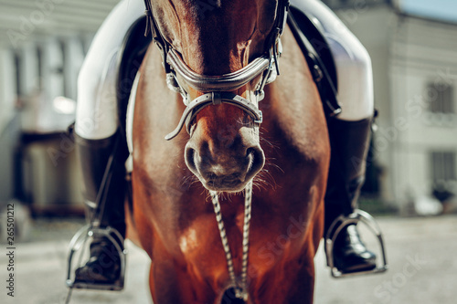 Fotografie, Tablou Close up of a brown horse nose
