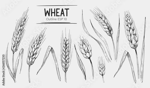 Canvas Wheat ears set