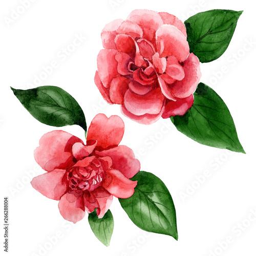 Fotografía Pink camelia floral botanical flowers