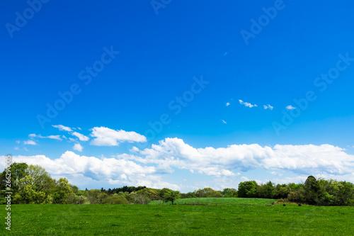 Fototapeta (栃木県-自然風景)夏空の下の牧場風景4