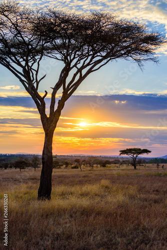 Zmierzch w sawannie Afryka z akacjowymi drzewami, safari w Serengeti Tanzania
