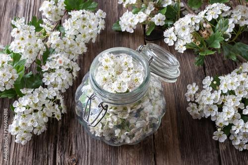 Fototapeta Preparation of tincture from fresh hawthorn flowers