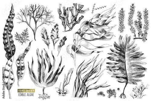 Obraz na plátně Hand drawn edible algae