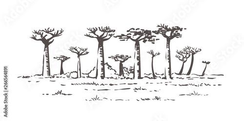 Beautiful Baobab trees in Madagascar Fototapeta