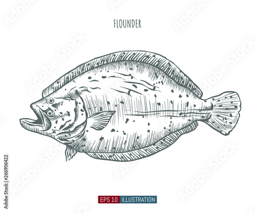 Fotografia, Obraz Hand drawn flounder fish isolated