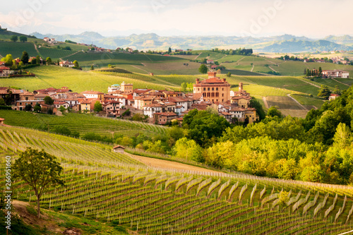 Fotografia Vineyards of Barolo
