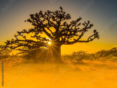 Obraz na płótnie Silhouette of baobab