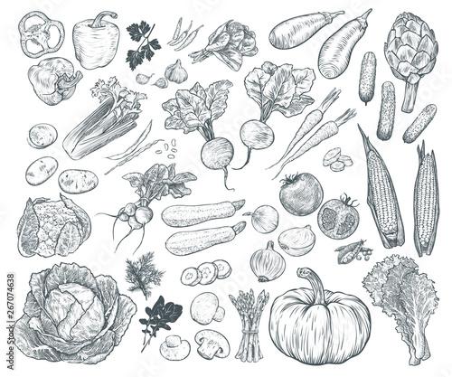Fototapete Hand drawn fresh vegetables set. Template for your design works. Engraved style vector illustration.