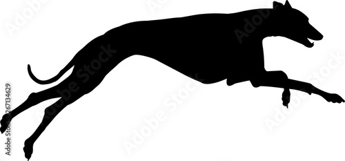 Fotografiet Greyhound 9 isolated vector silhouette