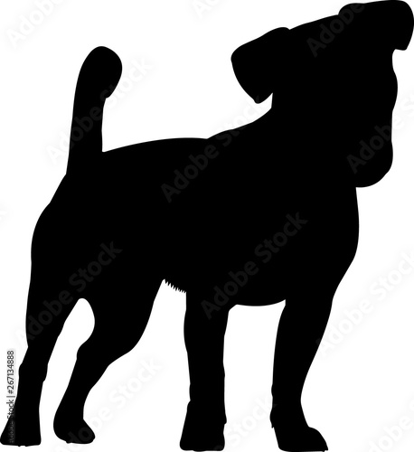Photo Jack Russell Terrier 7 isolated vector silhouette
