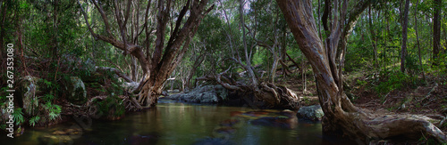 Tela A wonderful tropical creek runs between mysterious curved trees and boulders