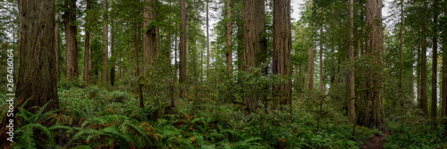 Obraz na płótnie Trail Dwarfed by the Trees Pano
