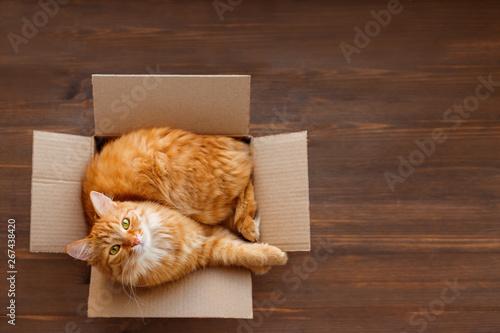 Fotografija Cute ginger cat lies in carton box on wooden background