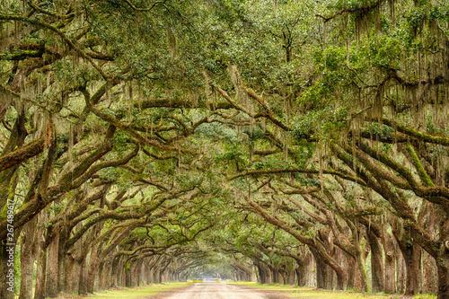 Slika na platnu Tunnel of Live Oak Trees in Savannah, Georgia