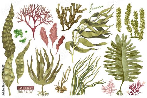 Fotografie, Obraz Hand drawn edible algae