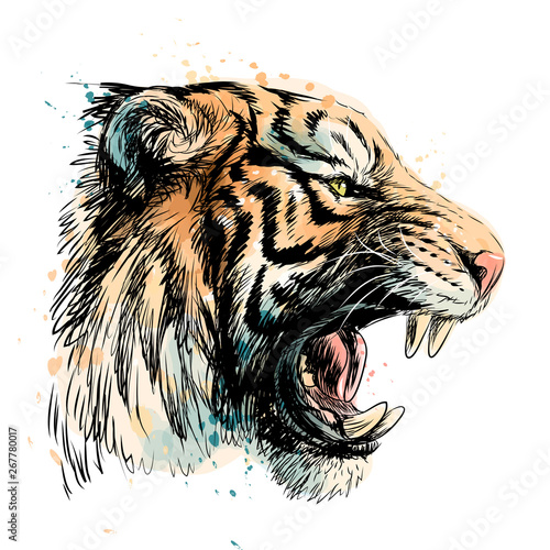 Wallpaper Mural Sketchy portrait of a tiger on a white background
