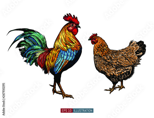 Obraz na płótnie Hand drawn rooster and chicken isolated