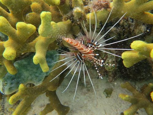 Canvas Pez nadando en el arrecife
