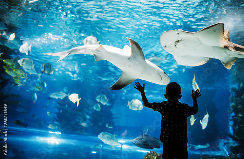 Obraz na płótnie Cute boy watches fishes in aquarium