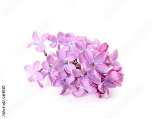 Valokuvatapetti Beautiful lilac flowers on white background