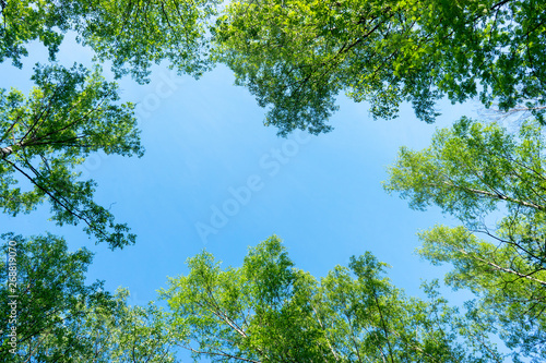 Photo Looking up through the treetops