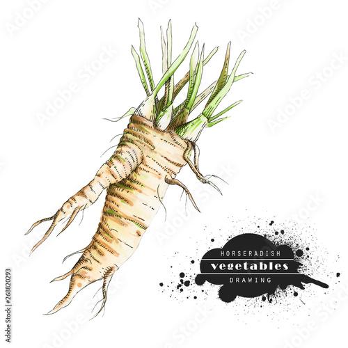 Photo Horseradish isolated on white background
