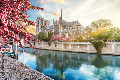 Fotografie, Obraz Notre Dame de Paris in spring with japanese cherry blossom trees and blue sky at sunrise